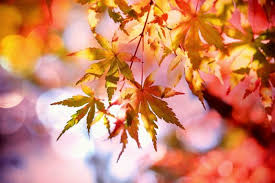 SEPTEMBER – the first month of autumn